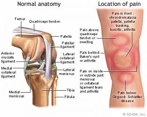 chondromalacia patella | singapore orthopedic & sports specialist, Skeleton